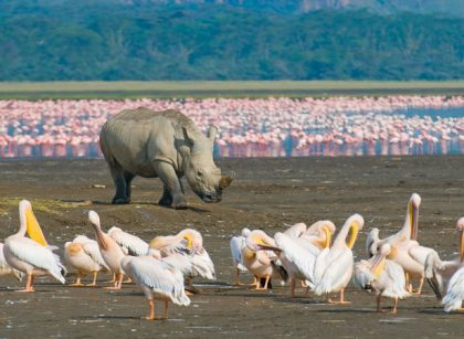 Lake Nakuru game viewing