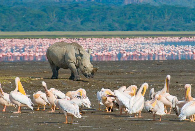 Lake Nakuru game viewing
