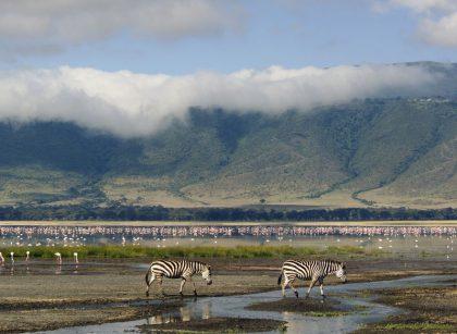 Ngorongoro creator