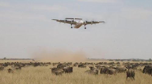 masai Mara flying package