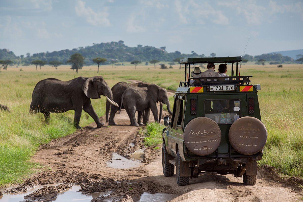 Amboseli game viewing 5
