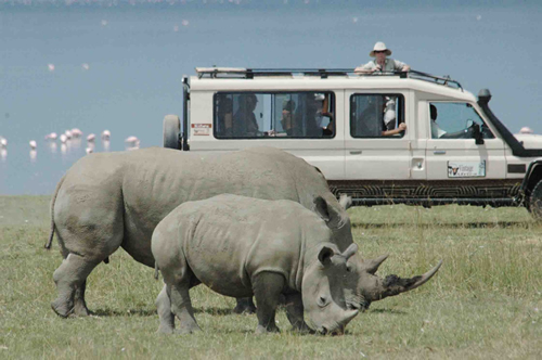 Lake Nakuru National Park game viewing 1