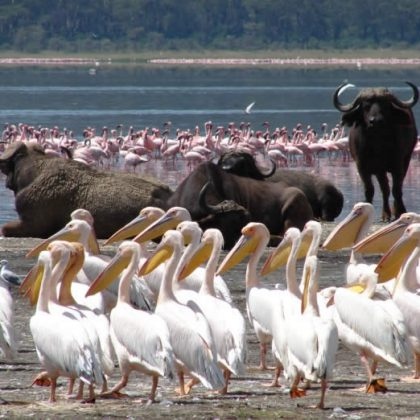 Lake Nakuru National Park game viewing 2