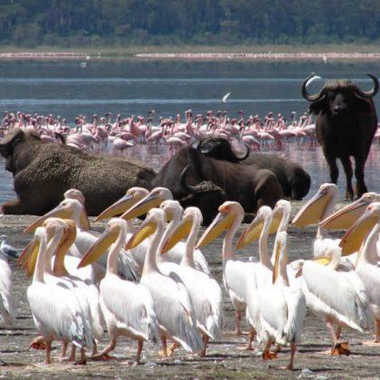 Lake Nakuru National Park game viewing 2
