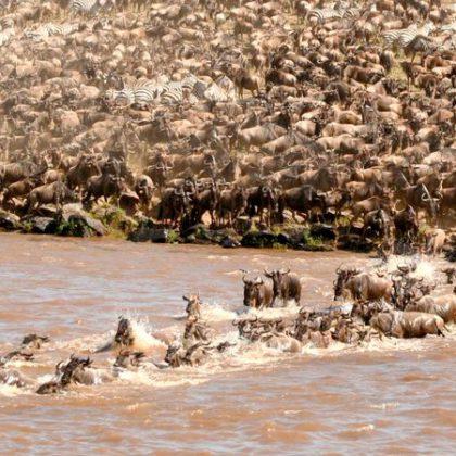Migration masai mara 1