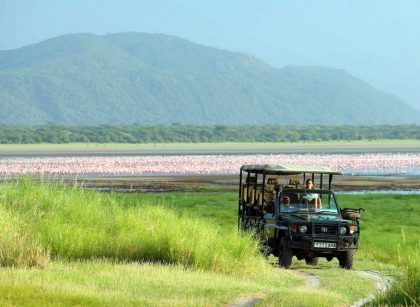Lake Manyara flamingos game drive
