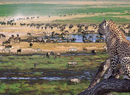 serengeti-np